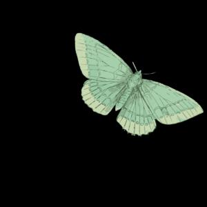 Parthenia Viol Consort